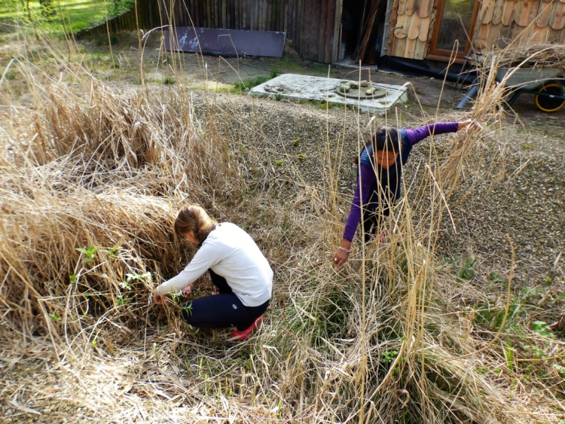 P1000922 - Gilda en Lili (Argentinië) helpen met het onderhoud van het rietveld
