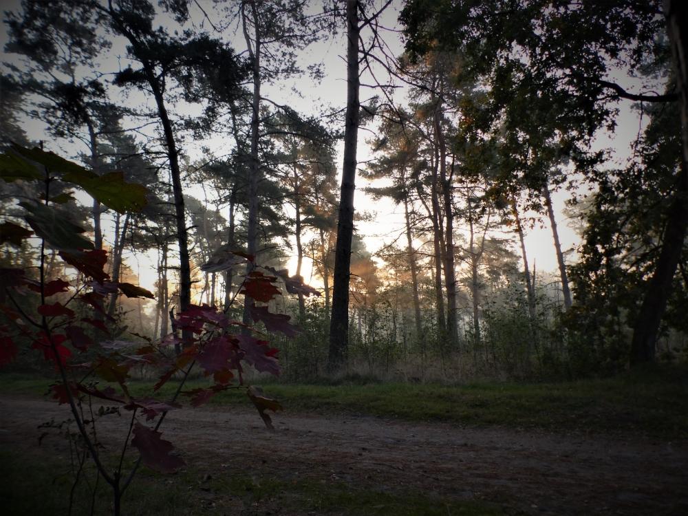 -f200 - de herfst breekt aan